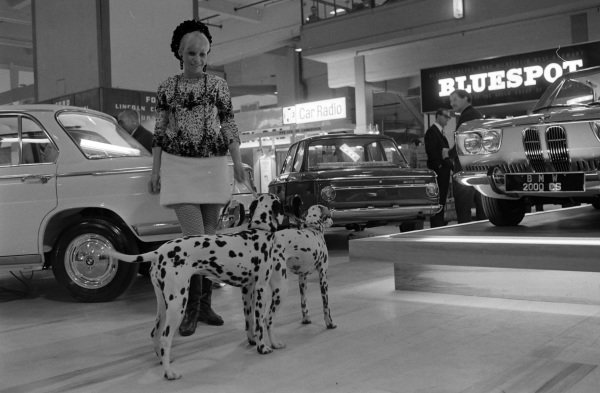A pair of Dalmatian dogs spot something of interest while on the BMW stand.