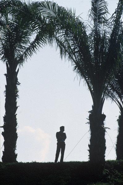 Sepang, Kuala Lumpur, Malaysia. 15-17 October 1999. Policeman and palm trees. Atmosphere. Ref: 99MAL56. World Copyright - LAT Photographic