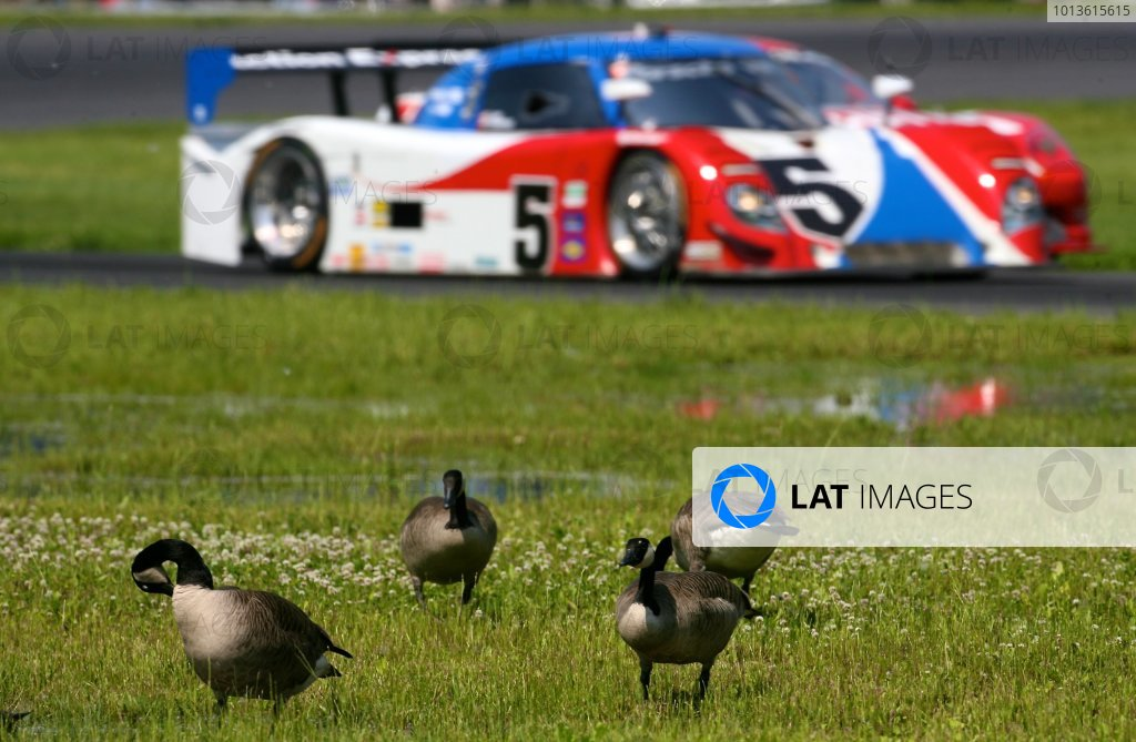 30 May, 2011, Lakeville, Connecticut USA The #5 Porsche Riley of David Donohue and Darren Law races past a gaggle of geese next to the track. ©2011, R.D. Ethan LAT Photo USA